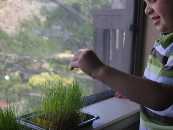 Grass Seed + Sponge