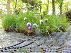 Grass Caterpillar Pets