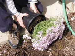 Mother's Day Tradition: Planting Flowers Together