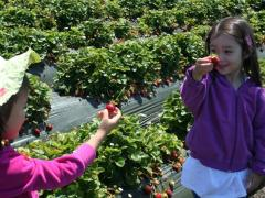 Strawberry Picking & Basket Weaving