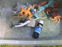Ocean Sensory Tray