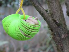 Squirrel Slinky Feeder